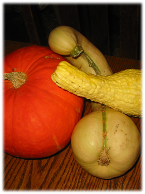 Privacy Gourds